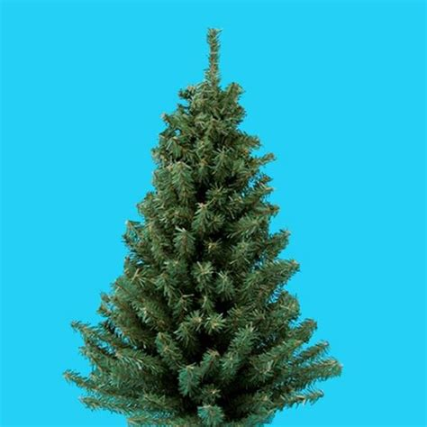 miniature artificial christmas pine tree with round wooden