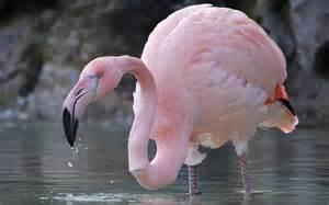 pink flamingos archangel raphael angels and celestials