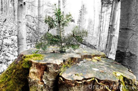 what to do with plant stump as christmas decoration outdoors tree growing on stump royalty free stock photos image 758098