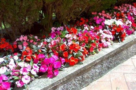 pianta fiorita tutto l anno fiori da bordura piante perenni fiori da bordura