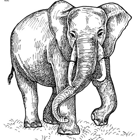 realistic elephant coloring page color paintings of elephant coloring page liked on