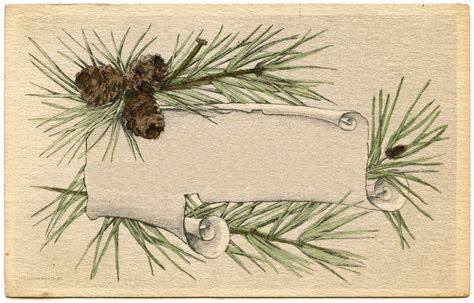 Card Frames Templates Pine Boughs by Vintage Graphics Pine Branch Frame The