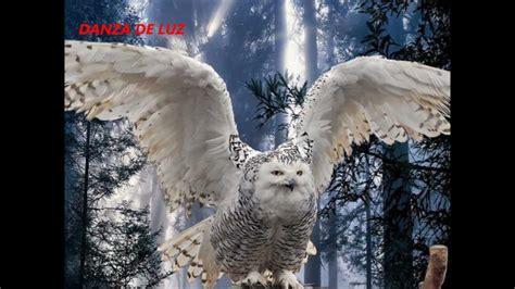 imagenes animal espiritual b 250 hos sonidos naturales природных звуков 自然音 youtube