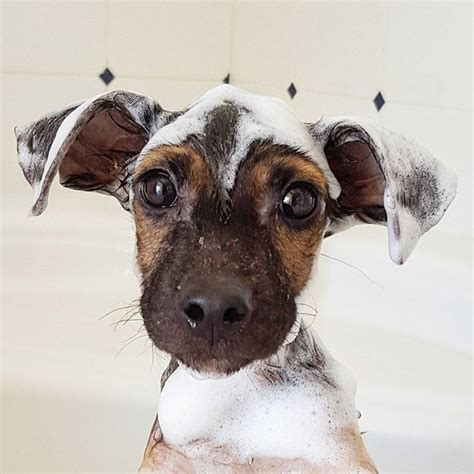 sudsy puppy sudsy puppy aww