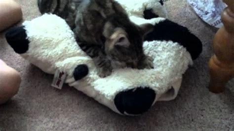 Where Can I Buy A Pillow Pet In A Store by Tigger The Cat On Pillow Pet Like Kitten
