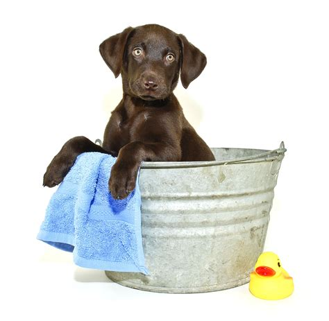 dogs and bathtubs free all natural pet dip day at wells brotherswells