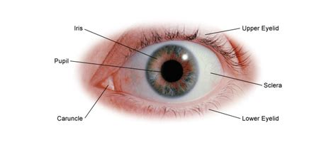 what part of the eye is colored eye health all guides center for s health
