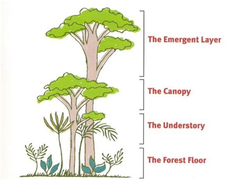 What Does Canopy In The Rainforest Brazil Forest Diorama Craft Confessions Of A