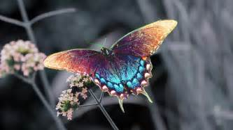 colorful butterfly beautiful colorful butterfly pictures 19 desktop