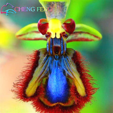 Affen Orchidee Kaufen by Kaufen Gro 223 Handel Affe Orchidee F 252 R Verkauf Aus