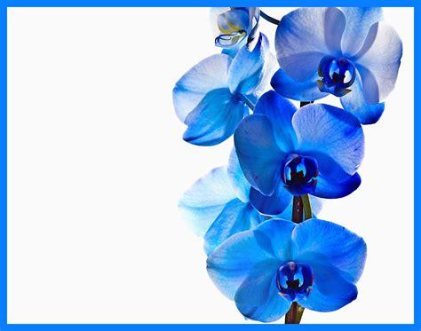 Orchideen Pflanzen Kaufen 785 by Orchideen Pflanzen Kaufen Luxus Pflanzen F R Badezimmer