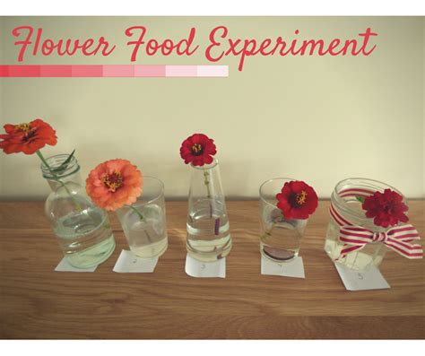 homemade flower food homemade flower food experiment