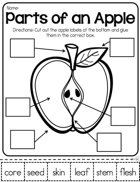 Apple Worksheets Grade by 25 Best Ideas About Johnny Appleseed On