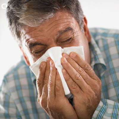 my is sneezing sneezing your way to a big belly do allergy medications make you obesity panacea