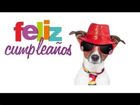 imagenes graciosas de cumpleaños de perros feliz cumplea 209 os perro de fiesta youtube