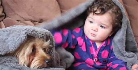 dogs meeting babies yorkie dogs meeting babies for the time catsdogsvideo