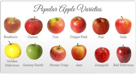 apple varieties braeburn apples nutrition nutrition ftempo