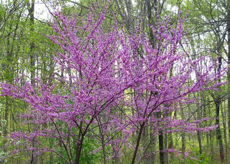 in bloom dogwood gardens