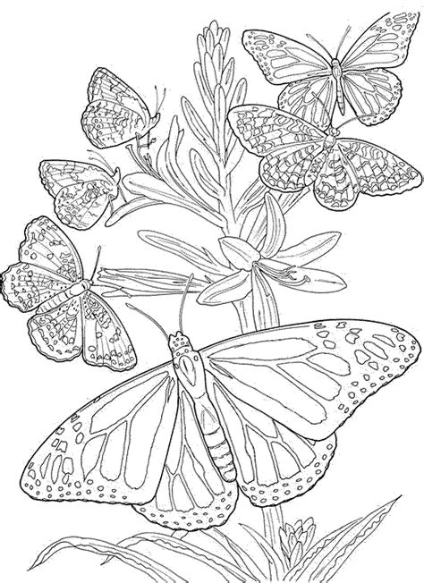 coloring books for adults to print detailed coloring pages for adults printable butterfly and