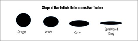 hair shapes transitioning to natural hair and understanding your curly