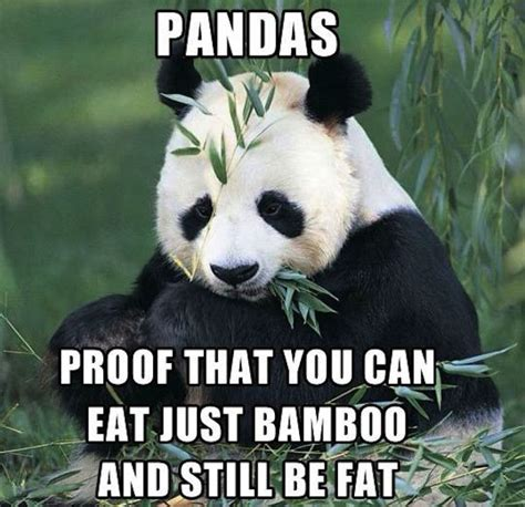 Funny Panda Memes - panda proof fat meme humour pinterest pretty much