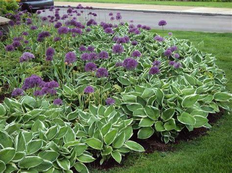 hosta flower beds hosta border landscaping pinterest