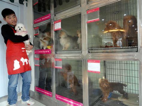 Home Design Stores London Ontario tiendas de mascotas luchan por hacer frente al abandono de