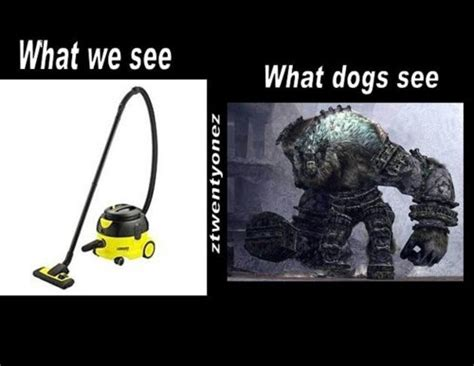 what colors do dogs see what dogs see bits and pieces