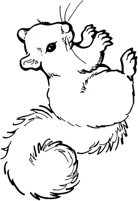 coloring pages baby birds free coloring pages of baby birds in nest coloring pages