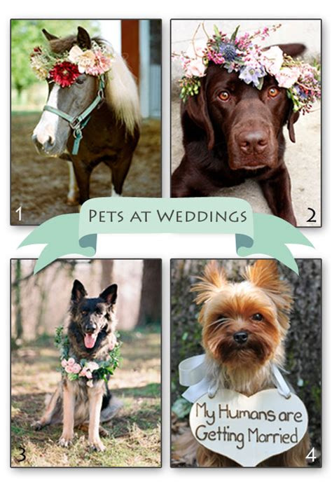 Wedding For Your Beloved Pet by Pets At Weddings 171 Flutterby Weddings