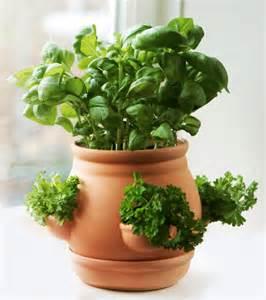 Ceramic kitchen herb pot terracotta 163 9 99