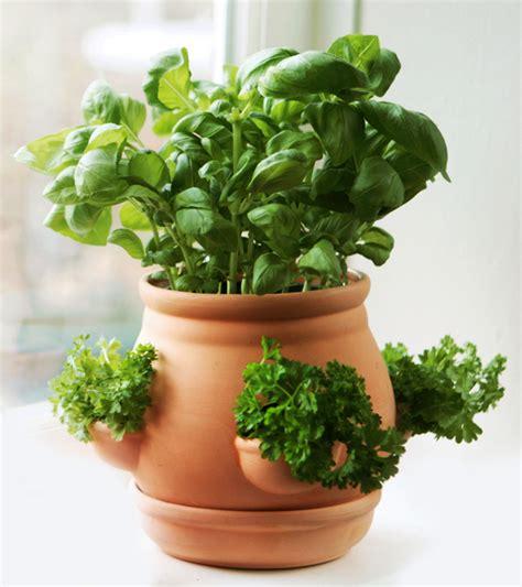 ceramic kitchen herb pot terracotta