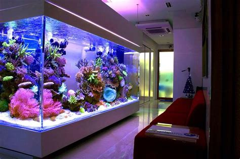 home aquarium huge home reef aquarium fish aquaria p rn pinterest
