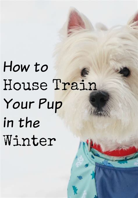 how to house train a small dog how to house train a dog house plan 2017