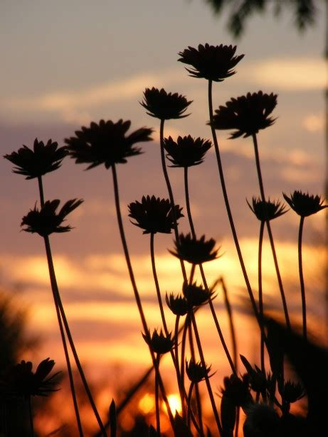 flowers  sunset  stock photo public domain pictures