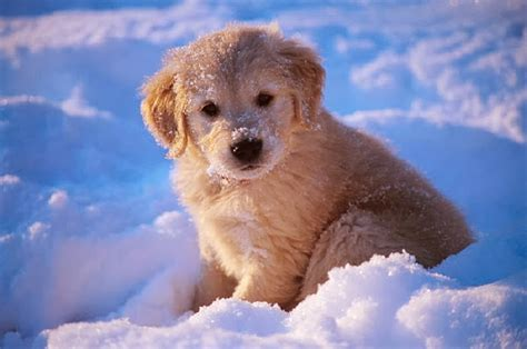 puppies in snow puppies cuteness overflow