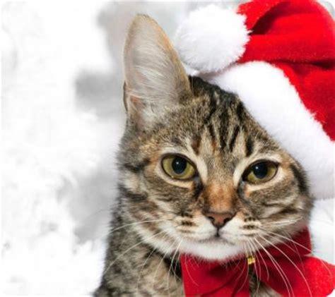 imagenes navidad gatitos gatos como papa noel imagenes de navidad gatos dom 233 sticos