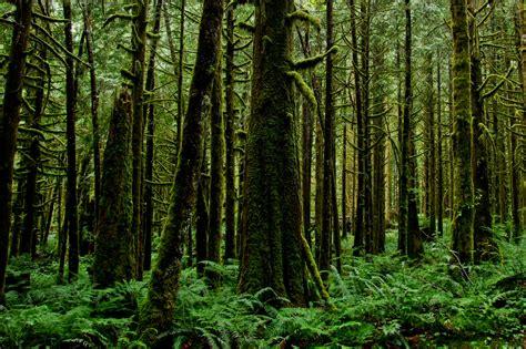 sebutkan  contoh hasil hutan catatan chandra