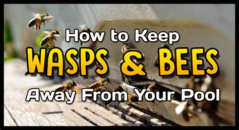 how to keep wasps away from house keep bees away from house 28 images top 28 how to keep