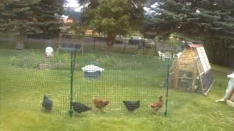 Simple Backyard Ideas For Small Yards Chicken Fence Run Youtube