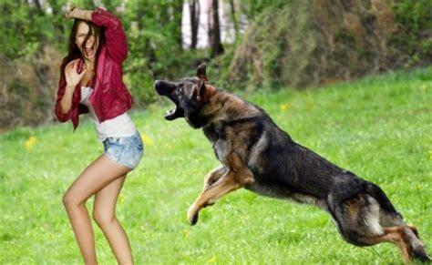 161 top 10 ataques de animales a personas imagenes fuertes dog bite attorney law offices of fernando d vargas