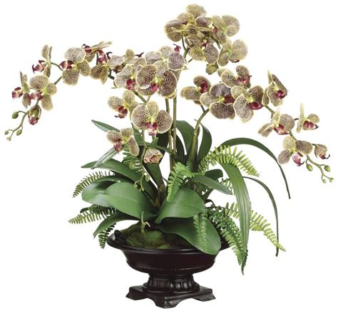 Lifelike White Phalaenopsis Orchids With Staghorn Ferns 17 Best Ideas About Potted Orchid Centerpiece On