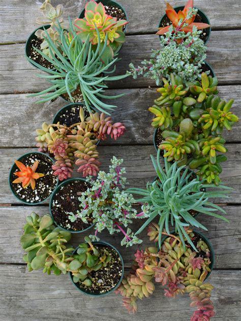 Living Wall Garden With Succulent Plants Shawna Coronado Wall Succulent Garden
