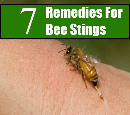 7 effective home remedies for bee stings search home remedy