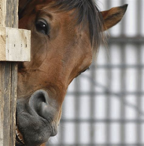 Cribbing Horses Treatment thrive weight loss side effects lose weight tips