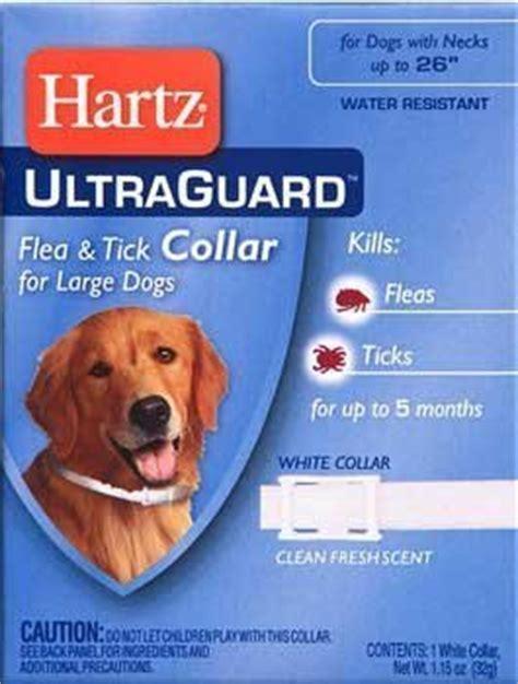 puppy flea collar best flea collar for dogs stop the scratching herepup