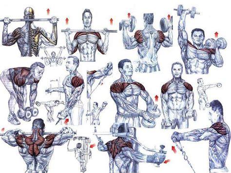 epl exercises shoulder exercises for beginning bodybuilders all
