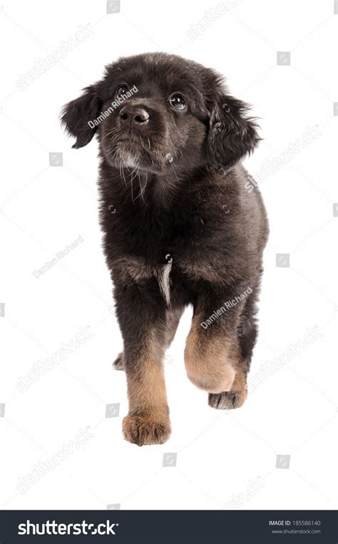 black and brown breeds black and brown dogs