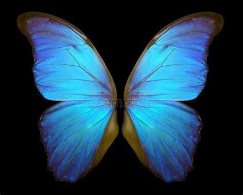 Black Blue Morpho Tote M Bonia asas da borboleta de morpho isoladas em um fundo preto