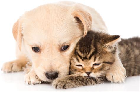 puppies hugging can hugs make you healthier salon